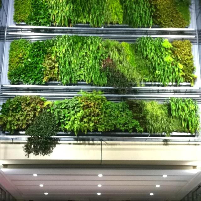 Britomart living green wall... Love this!