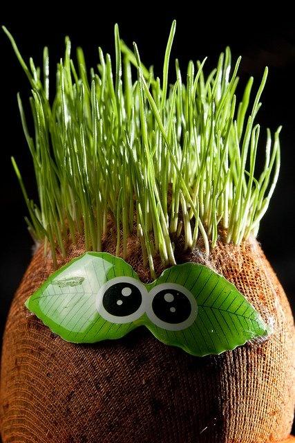 5 asombrosos experimentos con plantas. Ideal para un proyecto infantil.