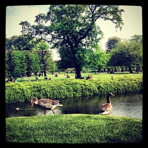 As The days get brighter and greener #duck #garden #danish #danmark #københavn #kongenshave #cool #copenhagen #gardens #lake #rosenborg #slot (at Rosenborg Slot)