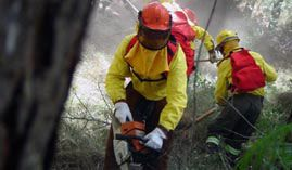 Curso online Experto en Prevención y Tratamiento de Incendios Forestales