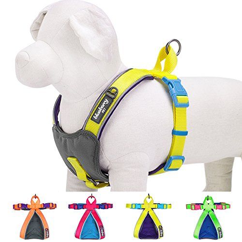 """Blueberry Pet Summer Hope 3M Reflective 5/8"""" Wide* 16.5"""" Neck* 15.5-17.5"""" Chest Fluorescent Yellow Padded Dog Harness Vest, Ultra-soft No Pull, Matching Collar Available Separately - http://www.petsupplyliquidators.com/blueberry-pet-summer-hope-3m-reflective-58-wide-16-5-neck-15-5-17-5-chest-fluorescent-yellow-padded-dog-harness-vest-ultra-soft-no-pull-matching-collar-available-separately/"""