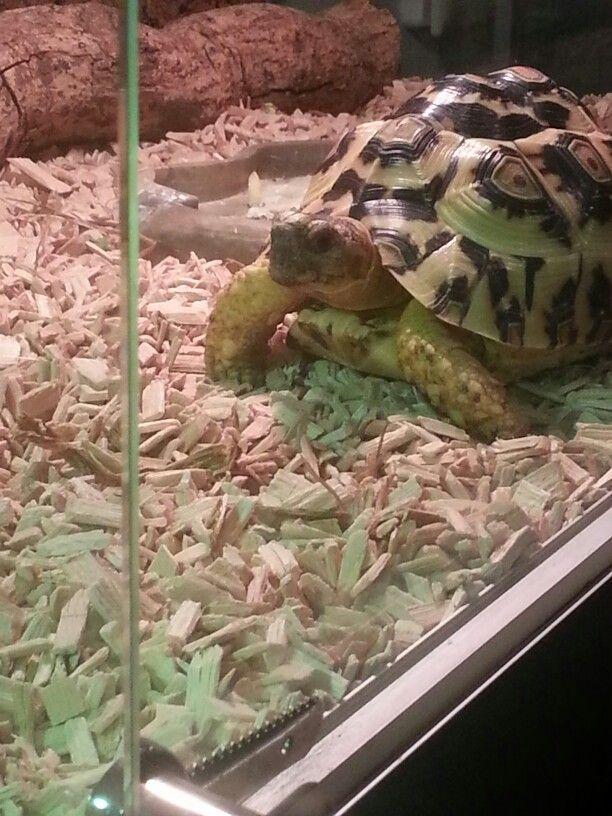 schildpad huisdier