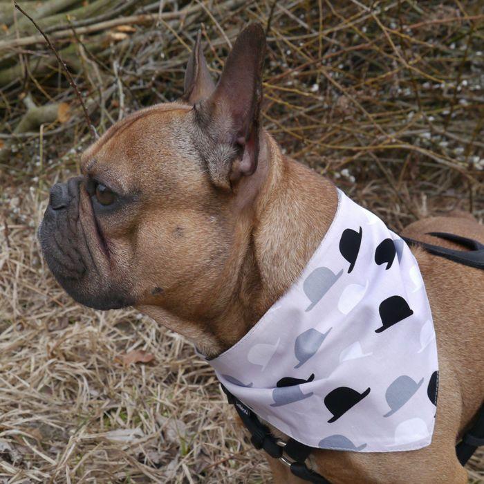 Bandana dla psa z imieniem, popielata, szara chusteczka zapinana na rzep Kapelusznik – Cena | sklep internetowy Psiakrew