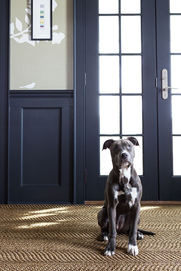 Our Dash and Albert Wave Sisal rug is the perfect companion for any high-traffic floor-and our four-legged friend agrees!