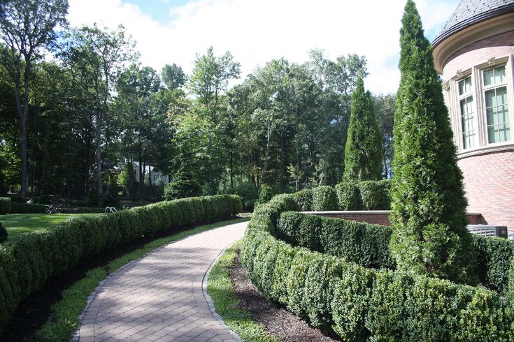 The 25 best ideas about American Boxwood on Pinterest