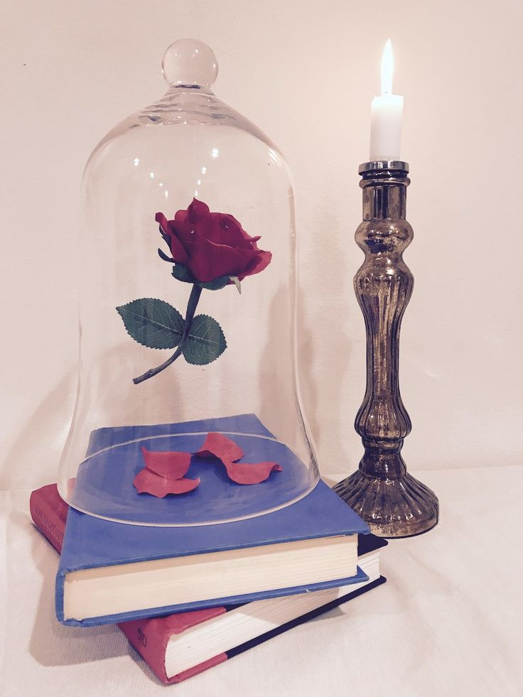 Best enchanted rose ideas on pinterest beauty and