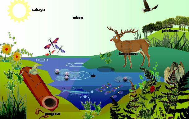 Belajar Biologi Online: Ekosistem| Komponen Ekosistem| Bahan Ajar Kelas VI...