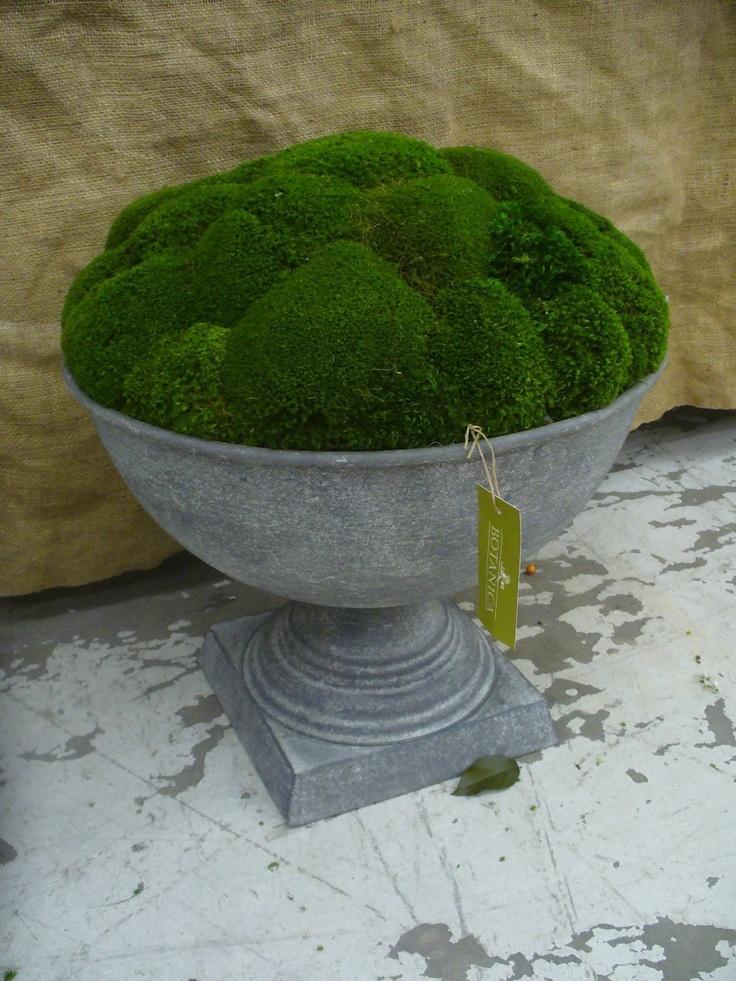 Moss in zinc planter