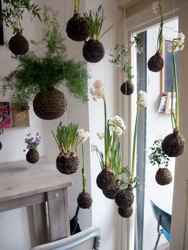 Pin On Indoor And Outdoor Plants For Boho Home