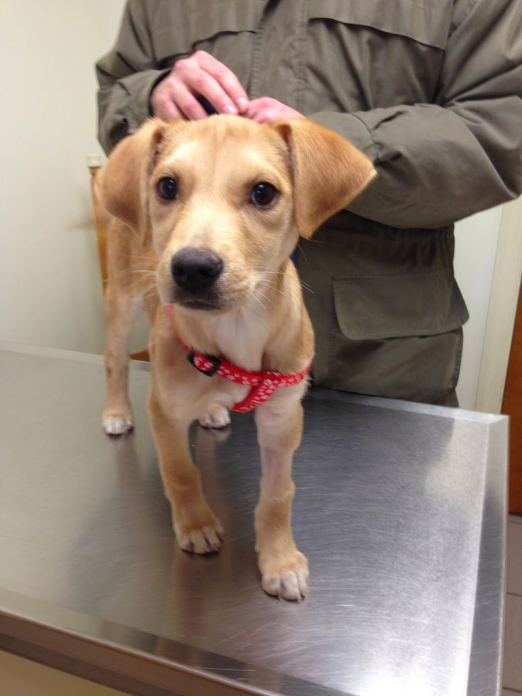 Parvo pups proactive and prepared pays off dog health