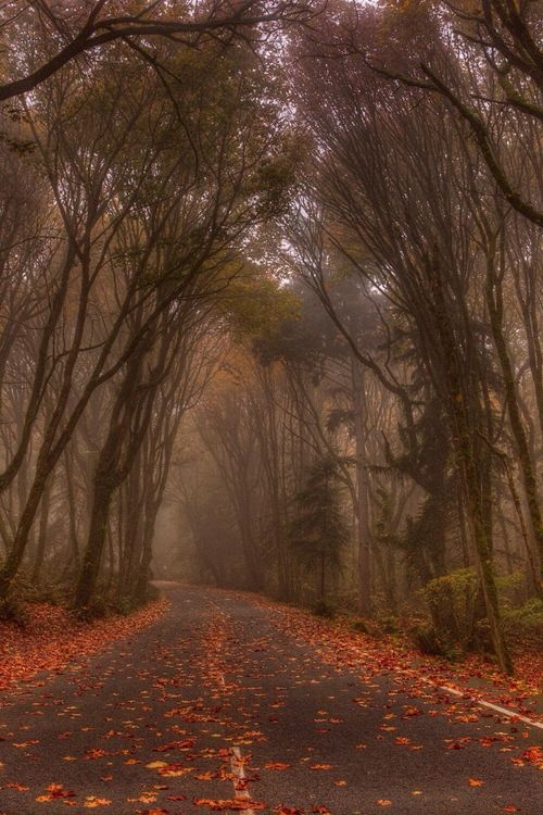 Dark Highway, Tacoma, Washington photo via coala