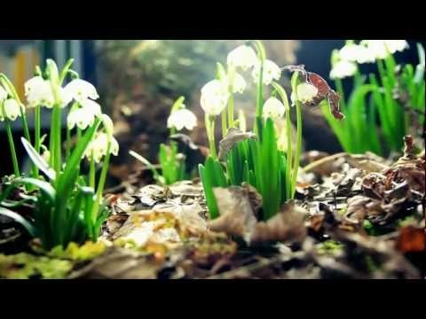 """Amazing Nature"""", by Chokchai Love King-   *Sensational* time lapse video of flower growth and time passing in nature.  LOVE!  :)"""