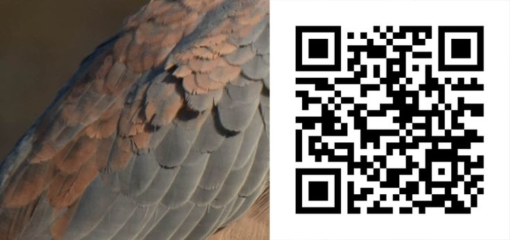 Guess the Bird 51 http://birdwatcher.co.za/guess-the-bird-51/