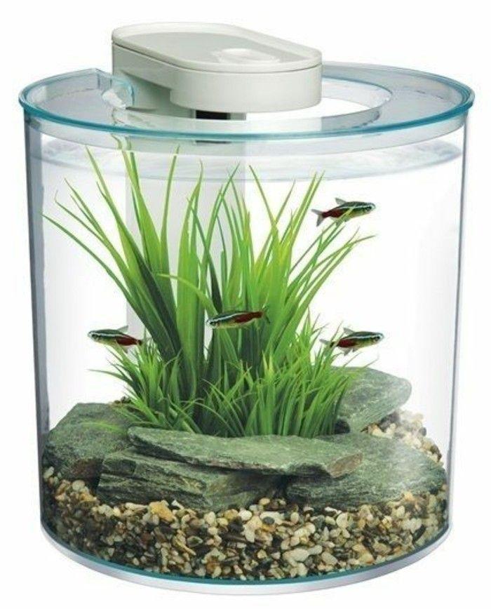 Aquarium Einrichtung Sorgt Fur Das Wohlfuhlen Der Wassertiere