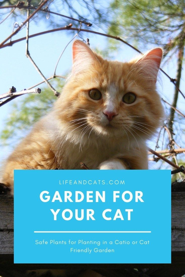 Cat Friendly Plants Can Be A Source Of Enrichment For Your Indoor Kitty Tips To Diy An Indoor Cat Garden Or An Cat Friendly Plants Cat Garden Cat Safe Plants