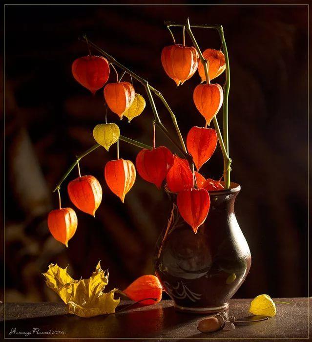 характер ваза с физалисами картинки его помощью