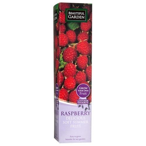 Raspberry Fruit Plant   Poundland