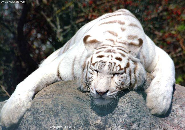 animales albinos - photo #5