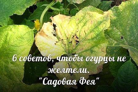 http://ok.ru/group51208174436483/topic/63927357404547