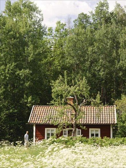 Det söta faluröda huset tittar upp i fältet av nyutslagna hundkäx, tillsammans med ett knotigt äppelträd och en fond av lövskog.