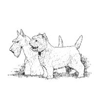 33 best images about digi stamps doggies on pinterest for Westie coloring pages