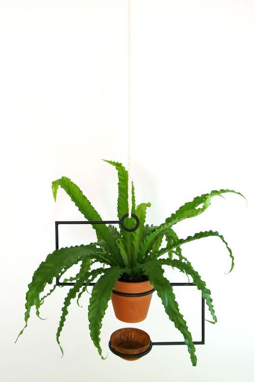 The Line Planter is a hanging planter that holds a plant pot and drip tray and can be easily raised and lowered for trimming and watering / Trey Jones