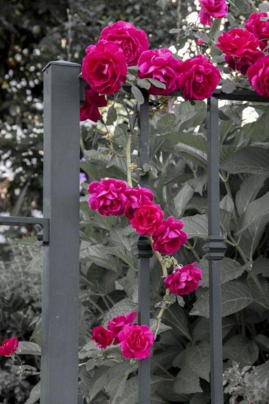 Carpe Diem | Une touche de couleur | Color splash, Garden ...