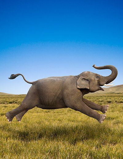 "One of my very favorites: ""Elephant in Motion"", by John Lund/Getty Images. John Lund was one of the pioneers of Photoshop fakeries."