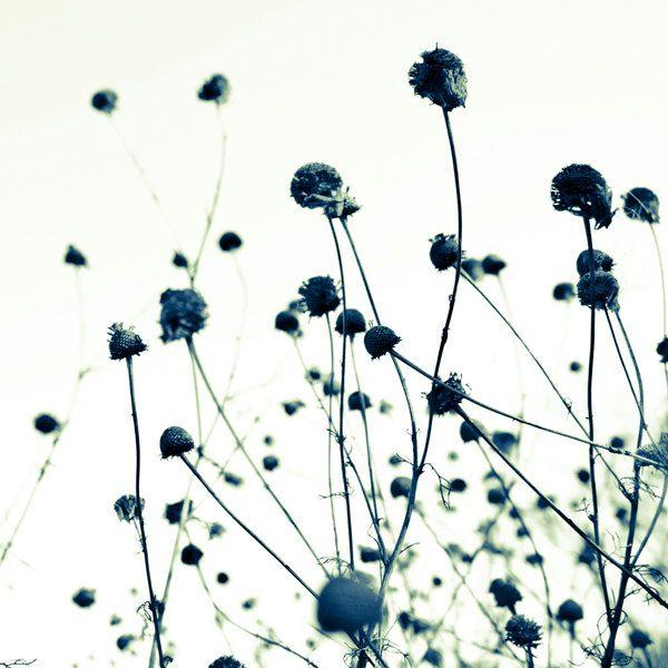 Zen image 1: Photos 8X8, Black And White, Art Prints, Minimalist Zen, 8X8 Zen, Minimalist Art, Botanical Art, Prints Minimalist, Natural Photos