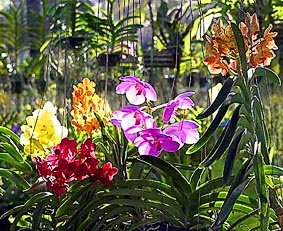 The different colors of Orchids