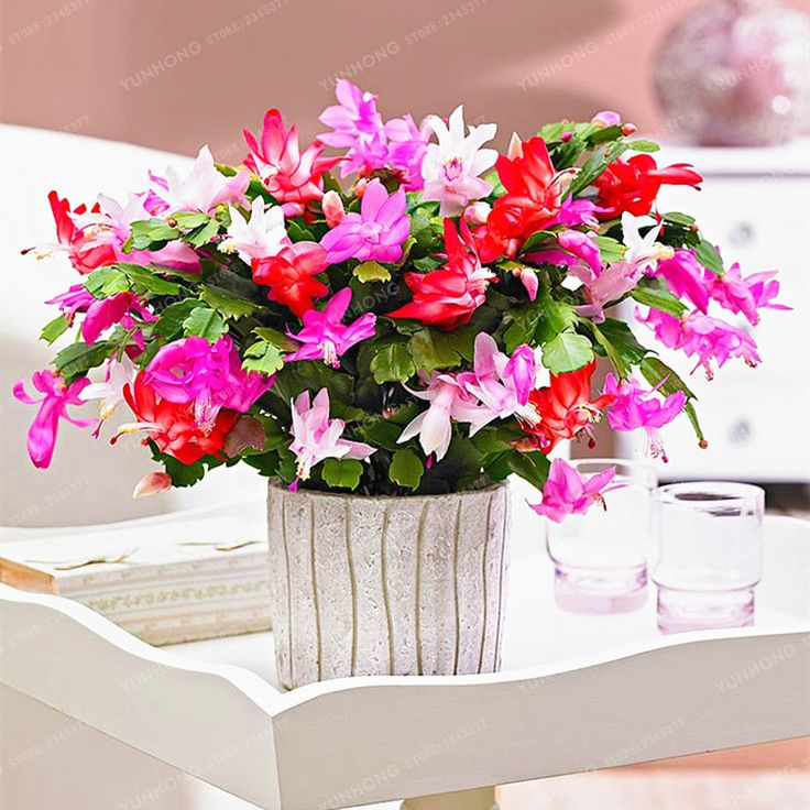 8 best Flowers for mw images on Pinterest | Pot plants, Potted ...
