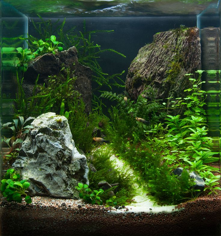 694 best planted nano tanks images on pinterest fish for Planted fish tank