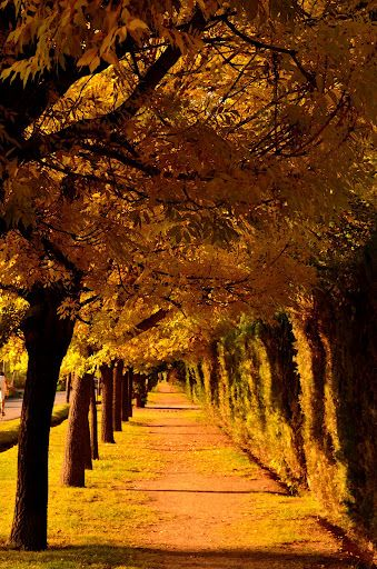otoño en Chacras de Coria, Mendoza, Argentina  Calle Alzaga, a metro del Club del Banco