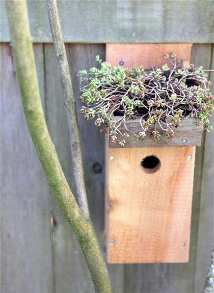 Vogelhuis met groen dak - Make a birdhouse where green grows on top // http://www.tuinieren.nl/tuinnieuws/zelf-maken/vogelhuis-met-groen-dak.html
