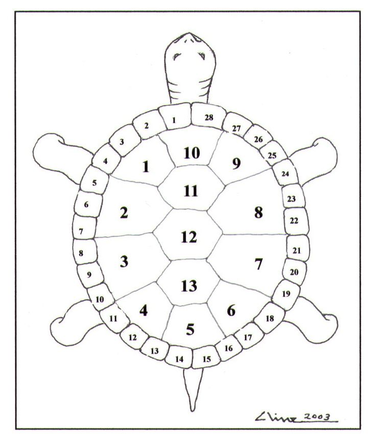 Native American Name for Turtle | Thirteen Moons on a Turtle's Back