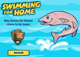 Swim For Home Help the salmon swim home, game