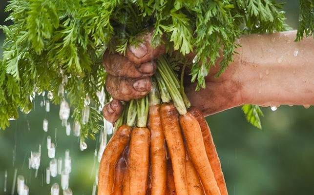CARROTS ARE EASY TO TAKE FOR GRANTED! Organic carrot crops are booming again – just in time for spring salads, juicing or a lovely moist carrot cake... Take a look at today's NEW post on our website for more info on this super root veg and delcious carrot recipes.
