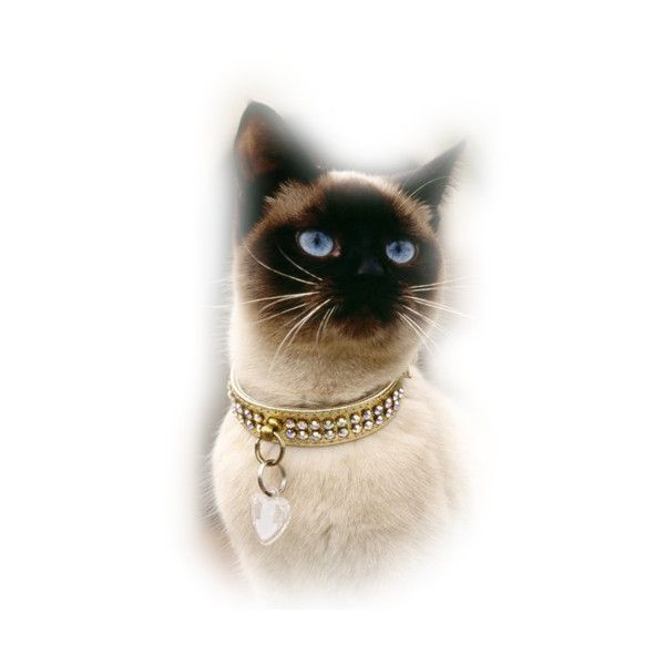 lizztish_a-special-feline1.png found on Polyvore featuring cats, animals and cats3