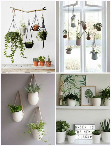tendencias para vivir sola plantasv-h600