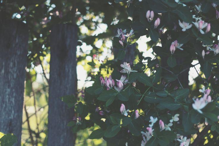 Flower bokeh summer  canon 70d