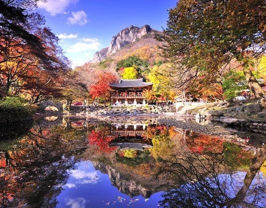It's the most beautiful season for autumn color leaves.  この頃は紅葉が一番美しいシーズンです