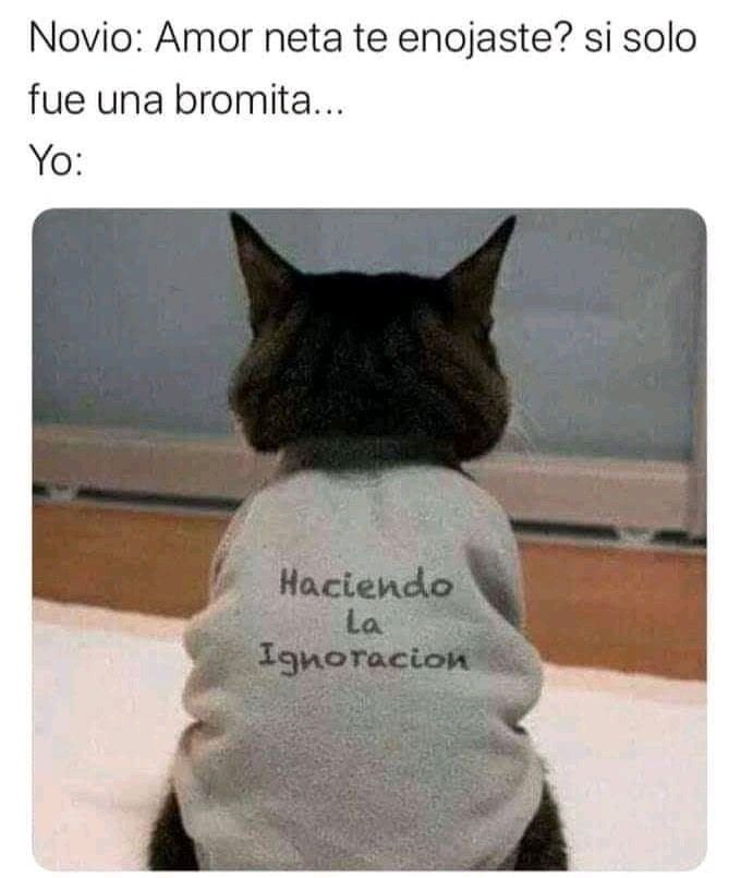Pin By Miriam Ramirez On Catlovers Funny Memes Funny Relatable Memes Animal Memes