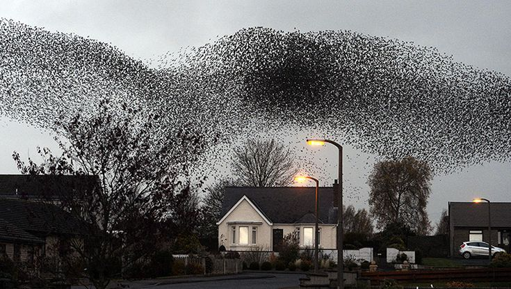 A murmuration of starlings over Gretna   Migrating starlings visit Gretna in Scotland twice a year, in February and November, and flocks of thousands of the birds form shape-shifting patterns in the sky. It is unclear why or how they perform this autumnal aerial acrobatic display