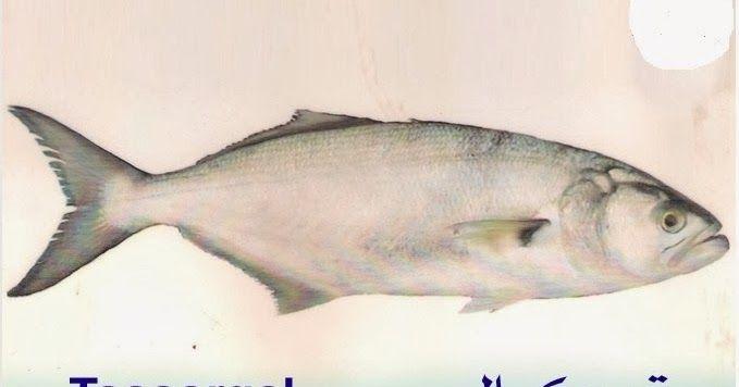 اسماء السمك بالدارجة المغربية اسماء انواع السمك في المغرب انواع سمك في المغرب Fish Fish Pet Pets