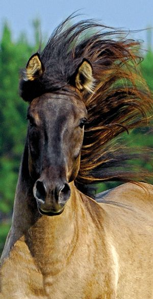 DP, a rare breed Marsh Tacky - owned by David Grant (photo: Dwain D. Synder) via Horse&Rider