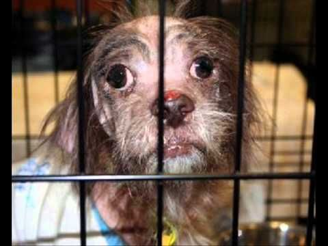 General information about puppy mills:   http://www.midamericapaper.com/foxena/puppymills.html  http://www.prisonersofgreed.org/Commercial-kennel-facts.html    View the (many) facilities puppy mill dogs are kept in:   http://www.prisonersofgreed.org/kennel-examples.html    Read about horrible puppy mill auctions:   http://www.prisonersofgreed.org/Auctio...