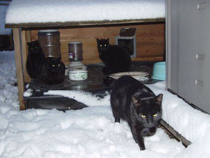 Ultimate Feral Cat Shelter (make it yourself!) Please click on this link for product details and how to design of these shelters yourself.