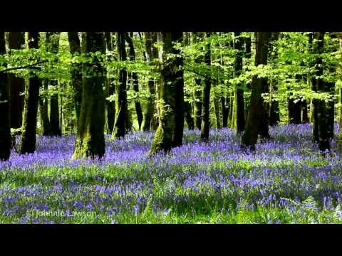 ▶ 8 Hour Nature Sound Relaxation-Soothing Forest Birds Singing-Relaxing Sleep Sounds-Without Music - YouTube