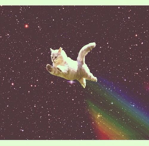 17 Best images about Galaxy cats tumblr on Pinterest ...