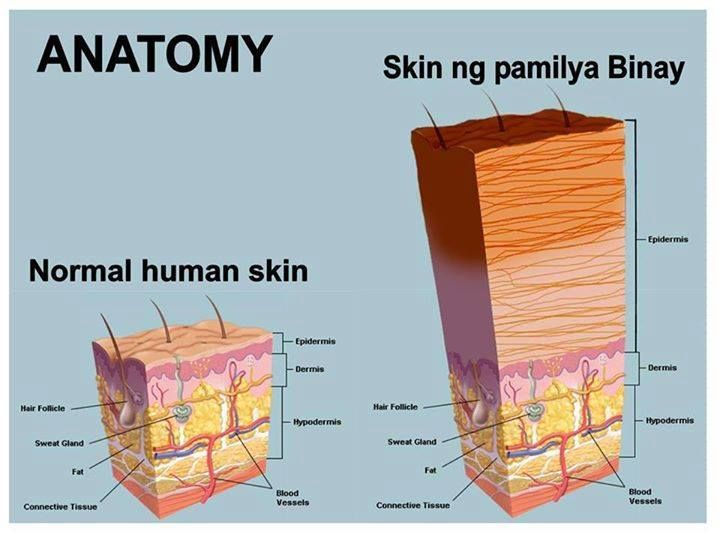 anatomy and physiology of the skin Chapter 1 anatomy and physiology of the skin 3 or stratum spinosum (murphy, 1997) the squamous layer is composed of a variety of.